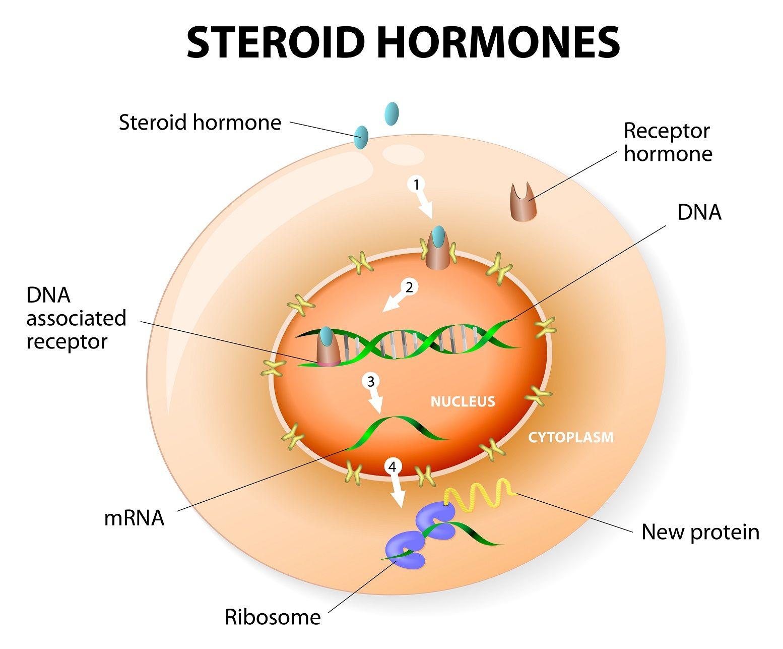 Steroid hormone Ciencias naturales, Ciencia, Receptor