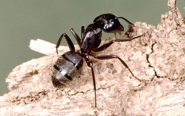 To Get Rid Of Ants Might Be Hard And Not Easy But Getting To Know