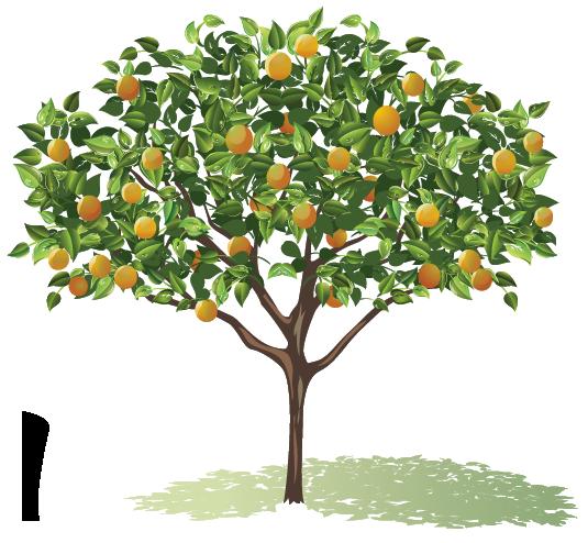 Pin By Elise On Lemon Tree Tree Drawing Fruit Trees Tree Drawing Simple