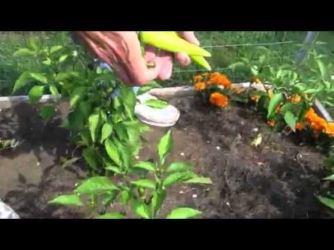 Como planificar un jardín de verduras