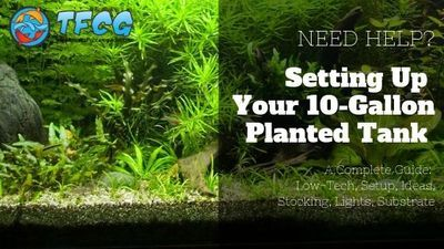 10 Gallon Planted Tank [Low-Tech, Setup, Ideas, Stocking, Lights, Substrate] In this article you'll learn exactly how to set up an EASY low tech planted tank. #10gallonfishtankideas