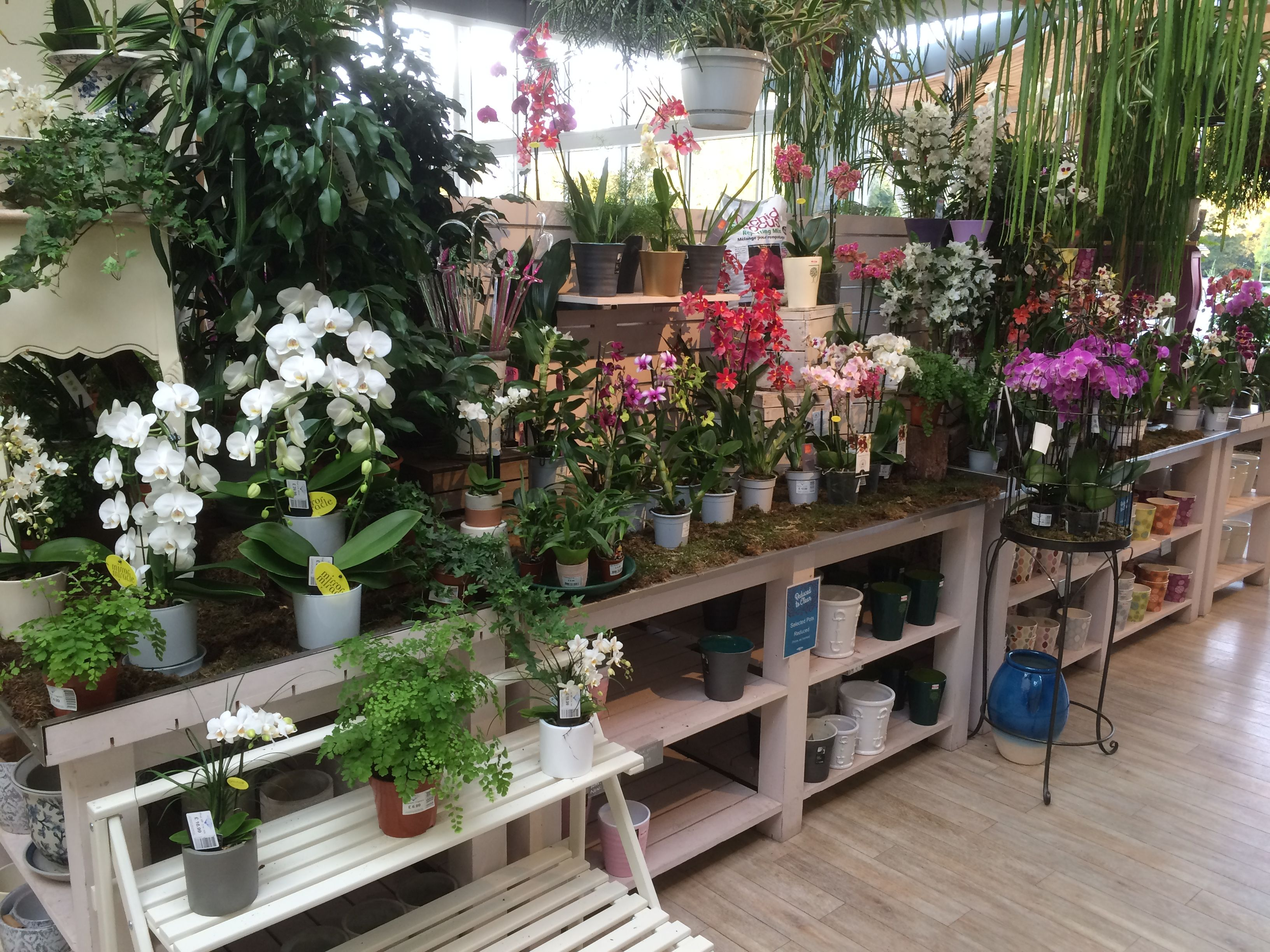 House Plant Display At Redfields Garden Centre Part Of The Blue Diamond Group November 2016 Garden Center Garden Center Displays House Plants