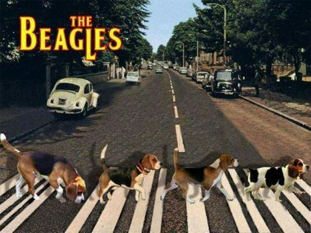 The Beagles Enjoy Rushworld Boards Abbey Road Album Cover