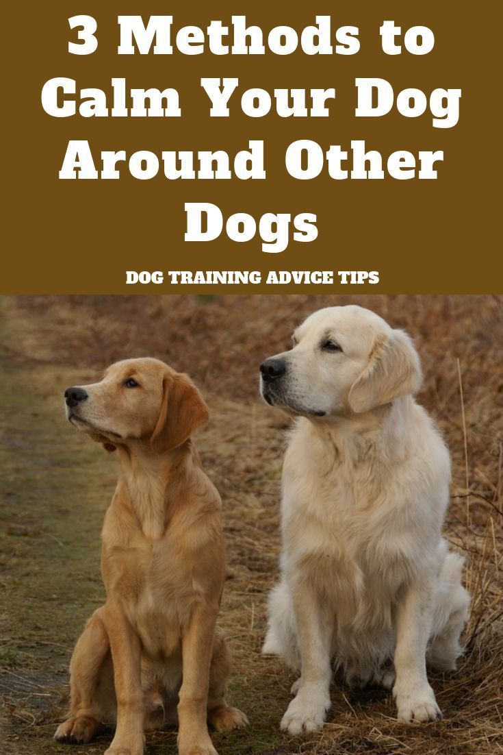 how to sedate a dog for grooming