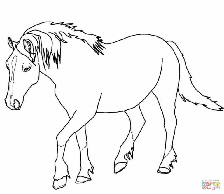 Palomino Welsh Horse Coloring Page Free Printable Coloring Pages