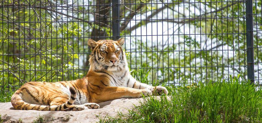 Tautphaus Park Zoo in Idaho Falls, Idaho