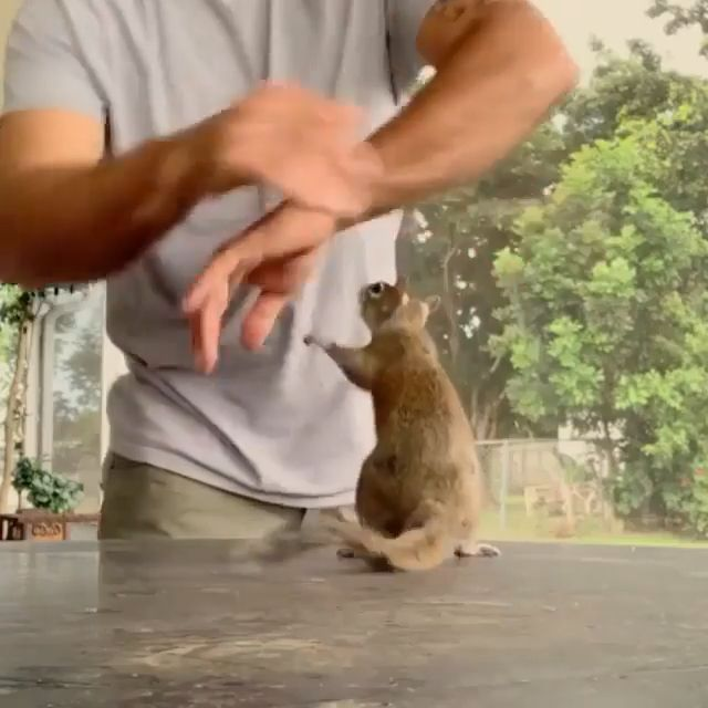 Well Trained Squirrel ♥️ #animalsandpets