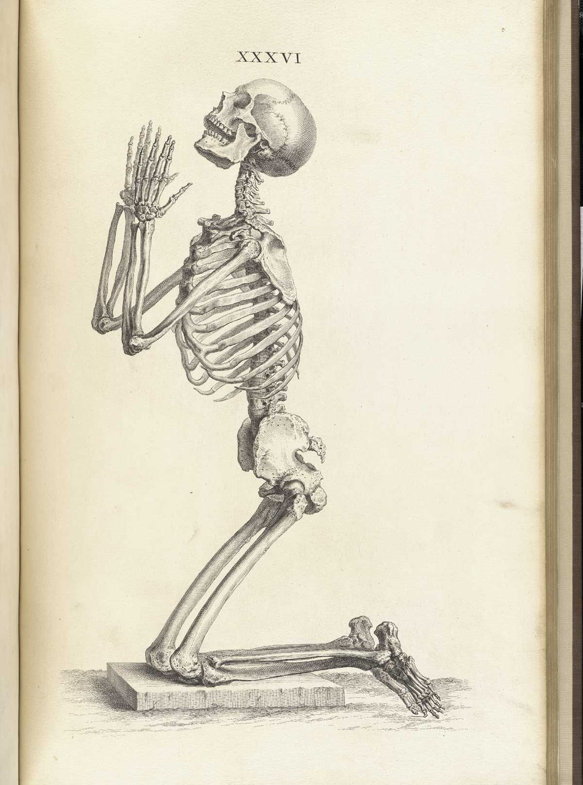 Side View of a Praying Skeleton ~ Plate 36, \