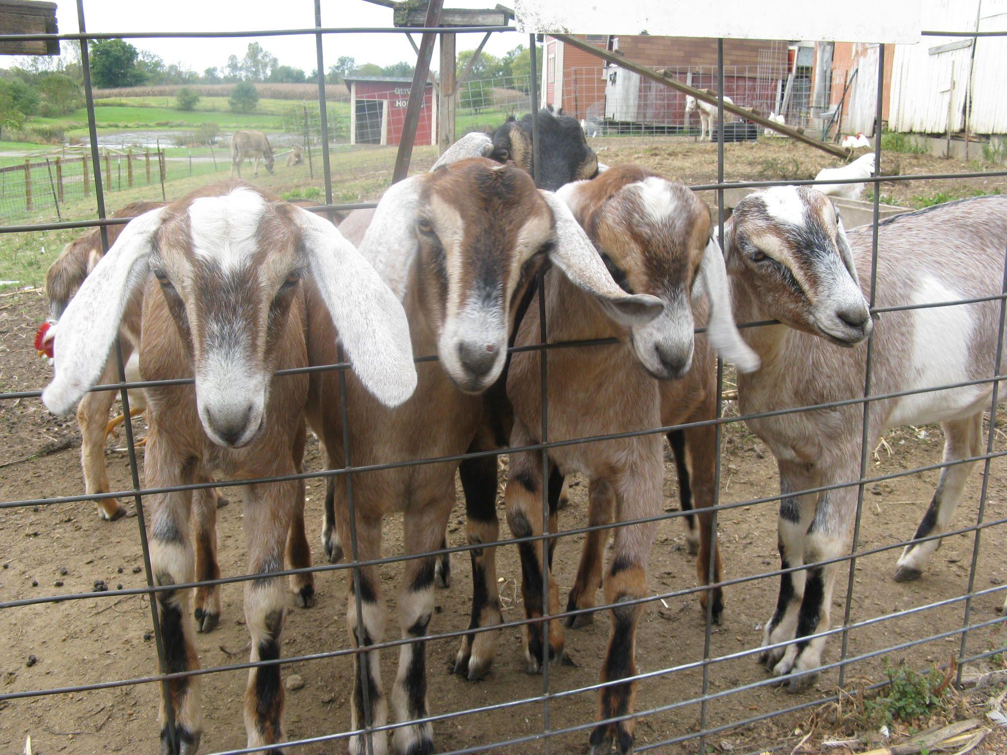 Devine's Farm