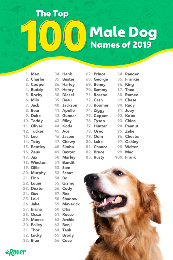 The Top 100 Most Popular Dog Names in 2019 by Breed, City ...