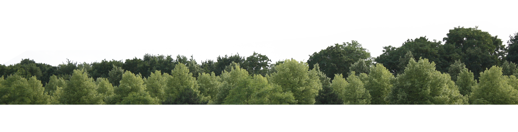 Tree Skyline Png Image Photoshop Backgrounds Image Skyline