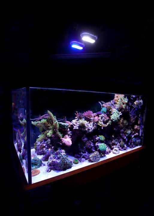 Gorgeous reef tank at Aquatic Warehouse lit with 2-100 Watt