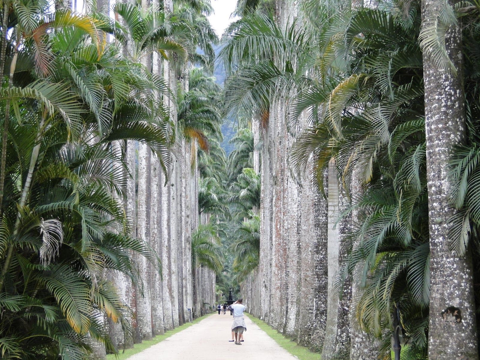 Jardim Botânico do Rio de Janeiro Garden, Outdoor decor