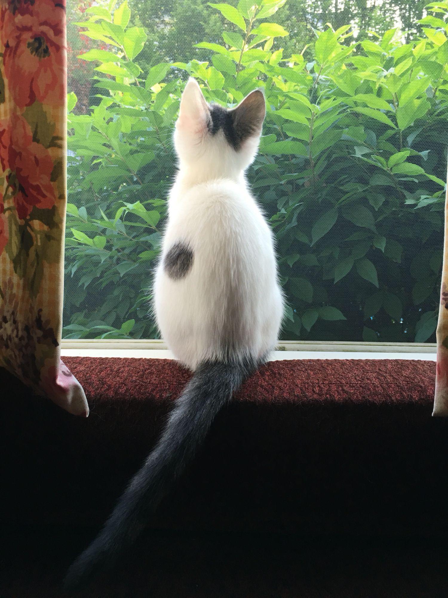 Little Chloe Looking Out The Window Con Imagenes Perro Gato Fotografia De Gatos Gatos