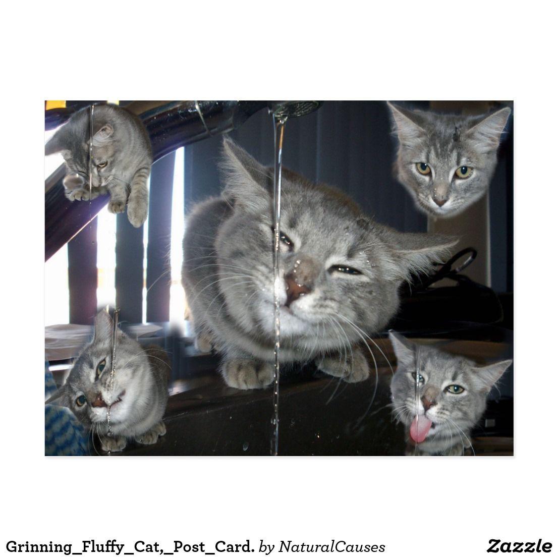 Grinning Fluffy Cat Post Card Postcard Birthday Postcards