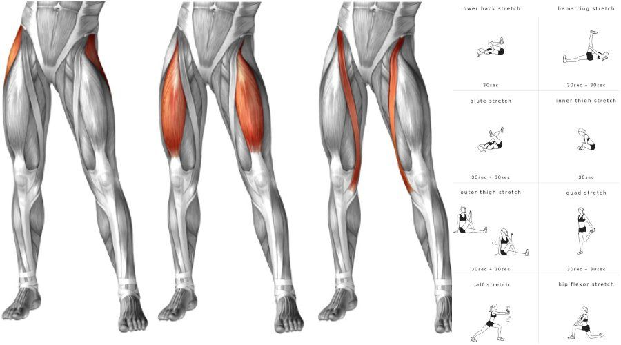 43+ Where is your hip flexor trends