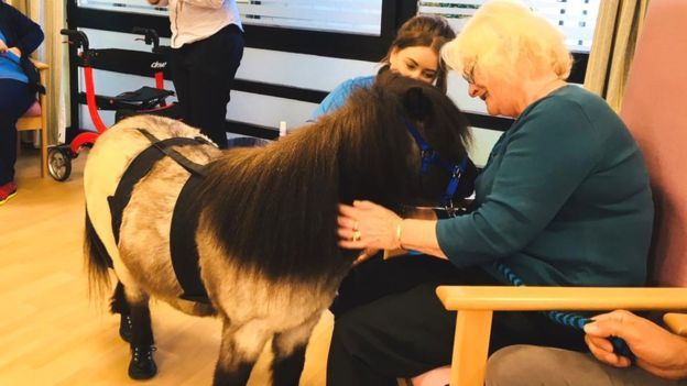 Ponies helping dementia patients (With images) Pony