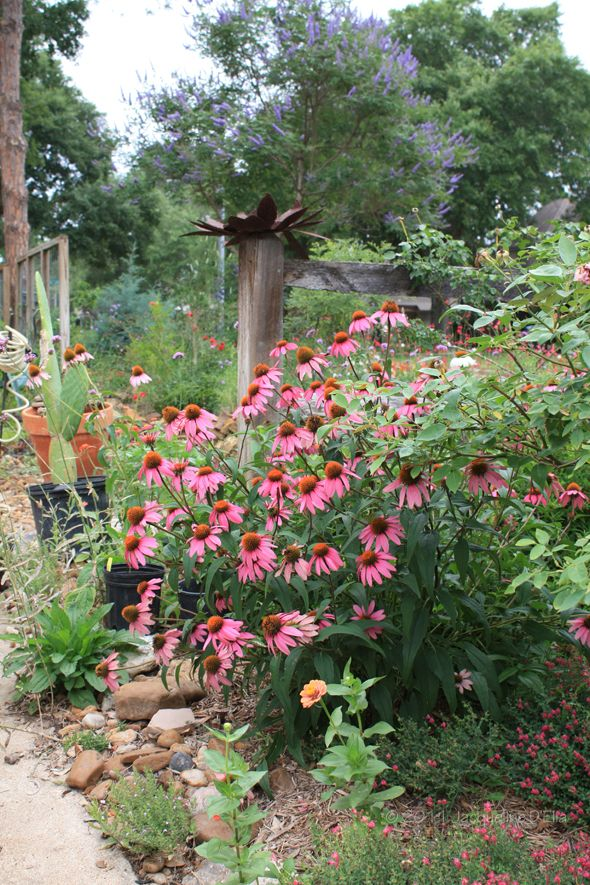 Marvelous What Most Of Us Want In Our Houston Area Gardens Are Low Maintenance Plants  That Are Attractive And Functional.