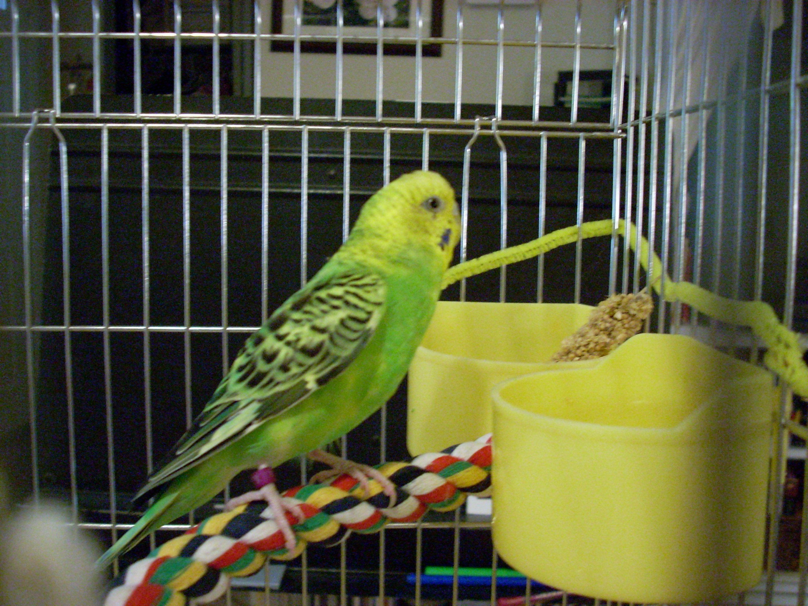 how to take care of a parakeet videos