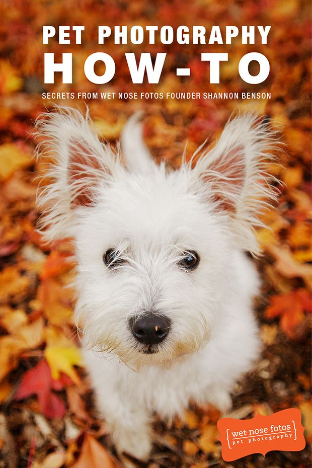 Review pet photography ebook by wet nose fotos pet photography pet photography ebook by wet nose fotos learn how to take amazing photos of your fandeluxe Epub