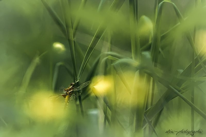 lost in grass 2 by wise photographie on 500px