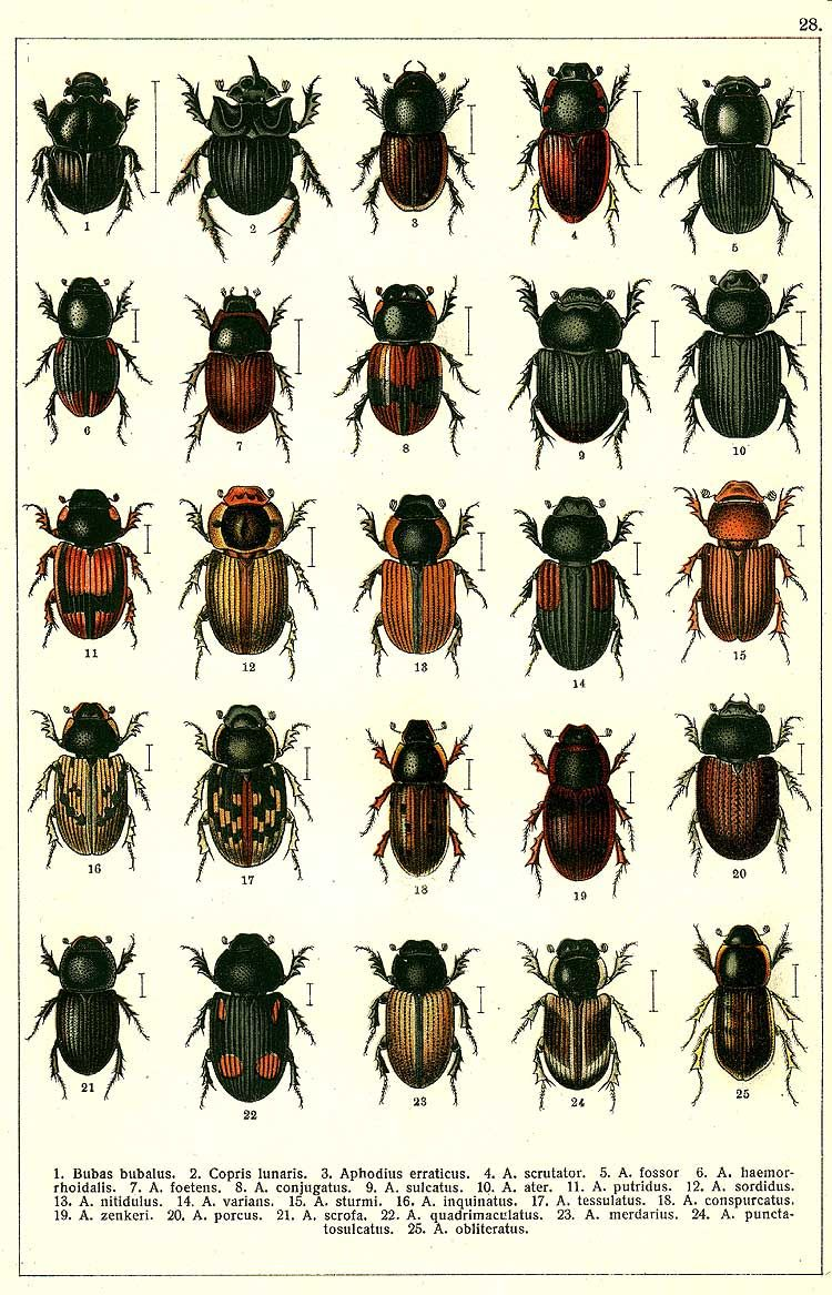 Beetles Of Russia As Described By G Yakobson 1905 1915