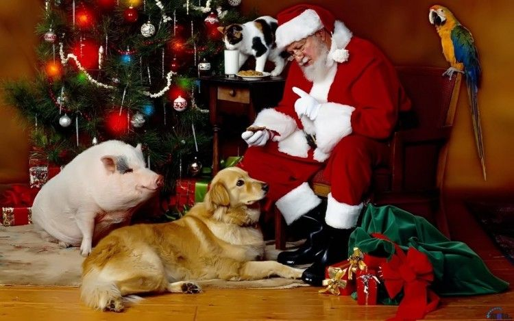 Fonds D Ecran Art Numerique Fonds D Ecran Fetes Noel Santas Claus Par Hendrixx Hebus Com Chats De Noel Animaux De Noel Chien Noel
