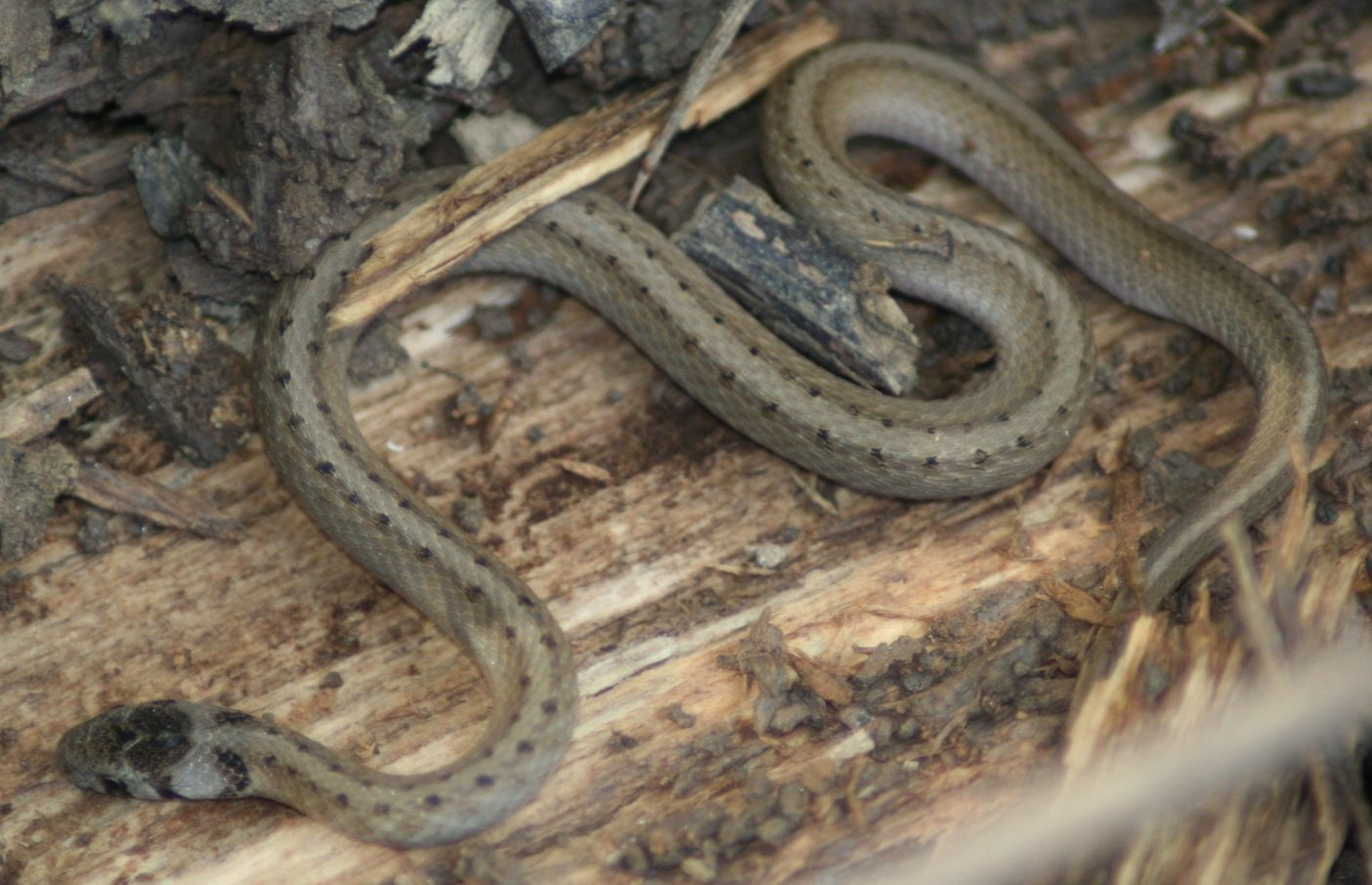 Pin By Esther Vandebunte On Michigan Outdoors Lions Tigers Wings Oh Mi Snake Reptiles Reptiles And Amphibians