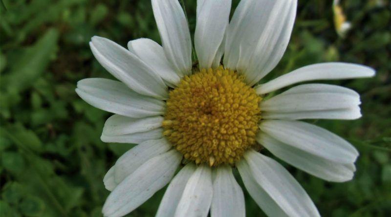 Kwiaty Jadalne W Ogrodzie Love Natura Kochamy To Co Naturalne Plants