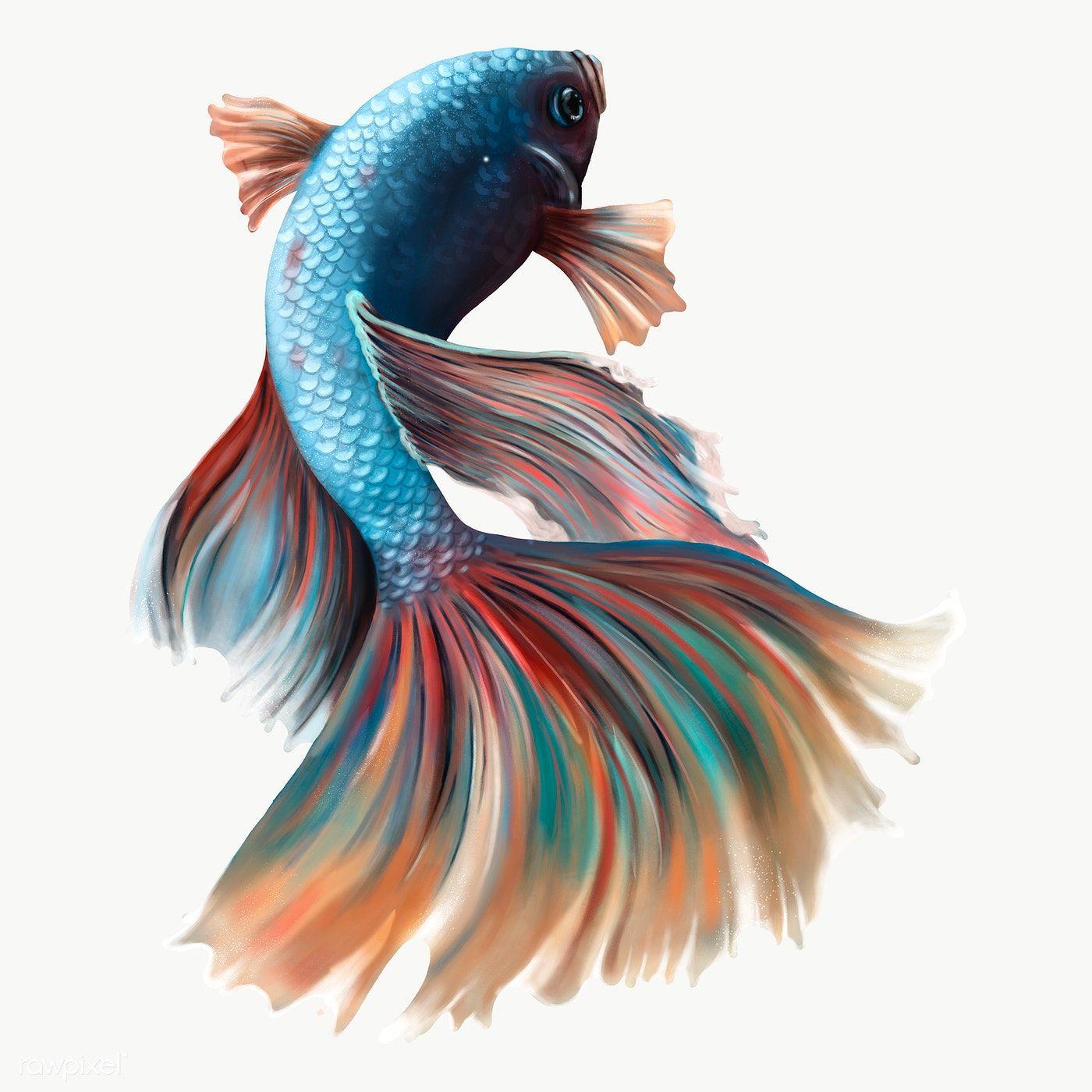Colorful Betta Fish Design Element Premium Image By Rawpixel Com Te Betta Fish Fish Design Logo Fish Design