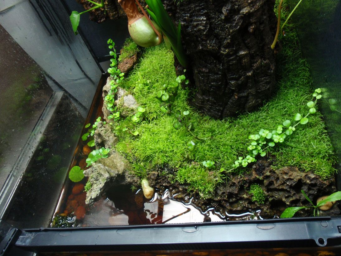 Pin By Tim Gorin On Carnivorous Plant Terrariums Frog Terrarium