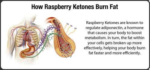 How raspberry ketones burn fat