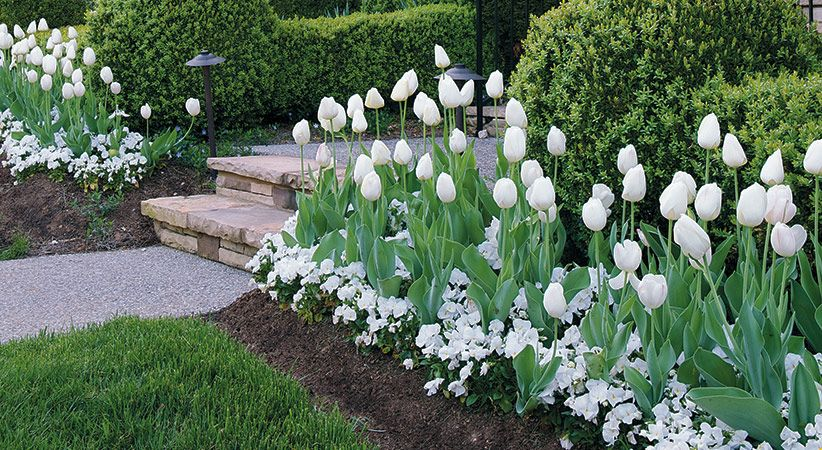 Go for bold with 3 mass planting ideas Plants, Garden