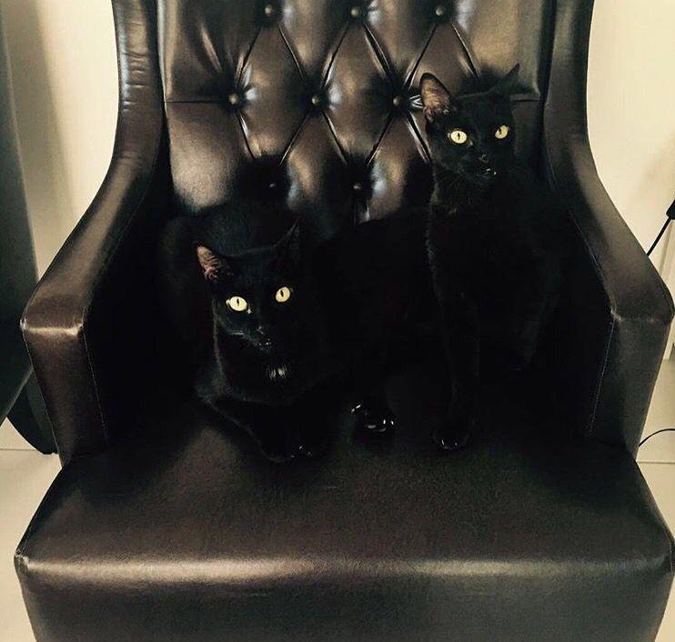 Meus gatos são lindos, os irmãos Pedros