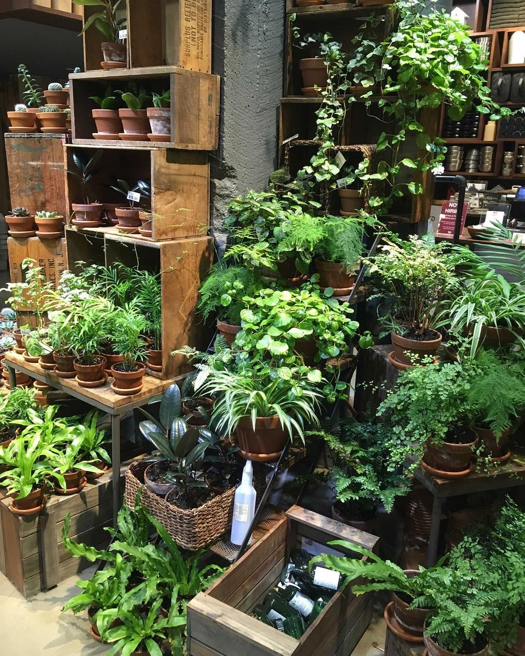 MUJI shop in New York with plants and realexing products