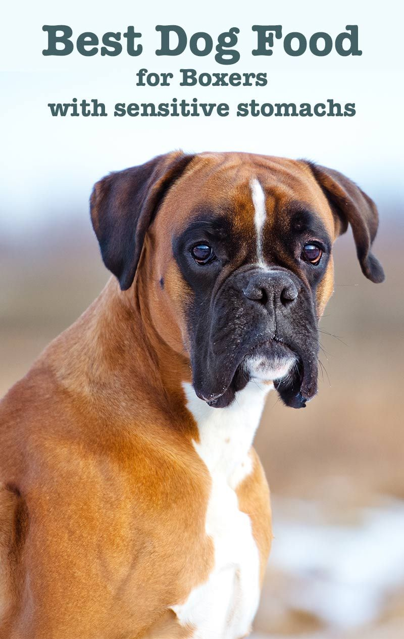 Best Dog Food For Boxers With Sensitive Stomachs Best Dog Food