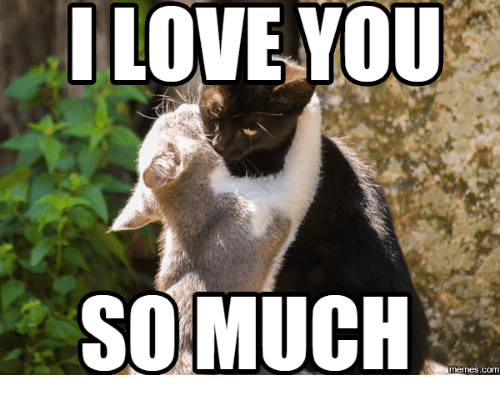 20 Very Sweet And Funny I Love You This Much Memes Sayingimages Com Love You Meme Cute I Love You Romantic Memes