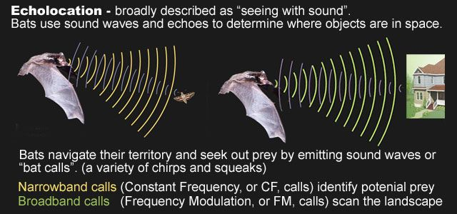 How Effective Are Bat Repellents Bat Repellent Bat Bat Deterrent