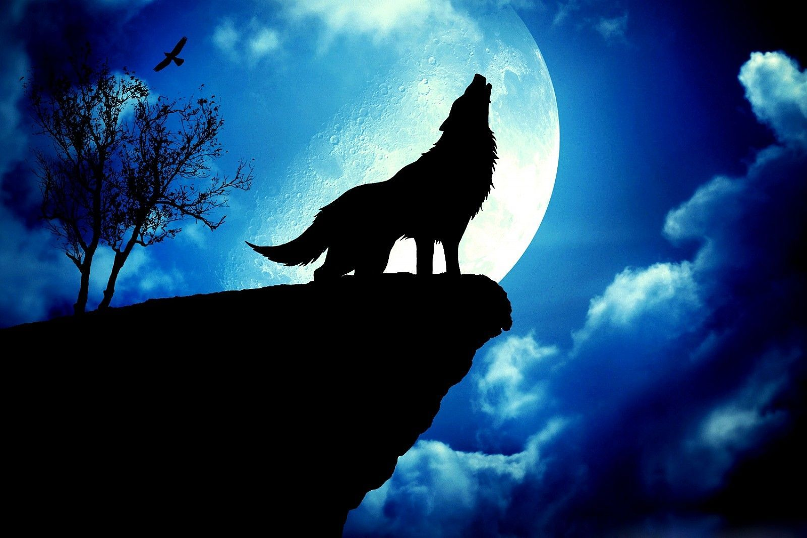 Wolf Howling At The Moon Wallpapers Watercolor Wolf Wolf S Rain Wolf Howling
