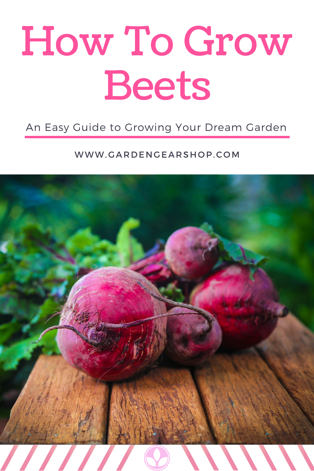 How To Grow Beets Growing Beets Beet Seeds Beets
