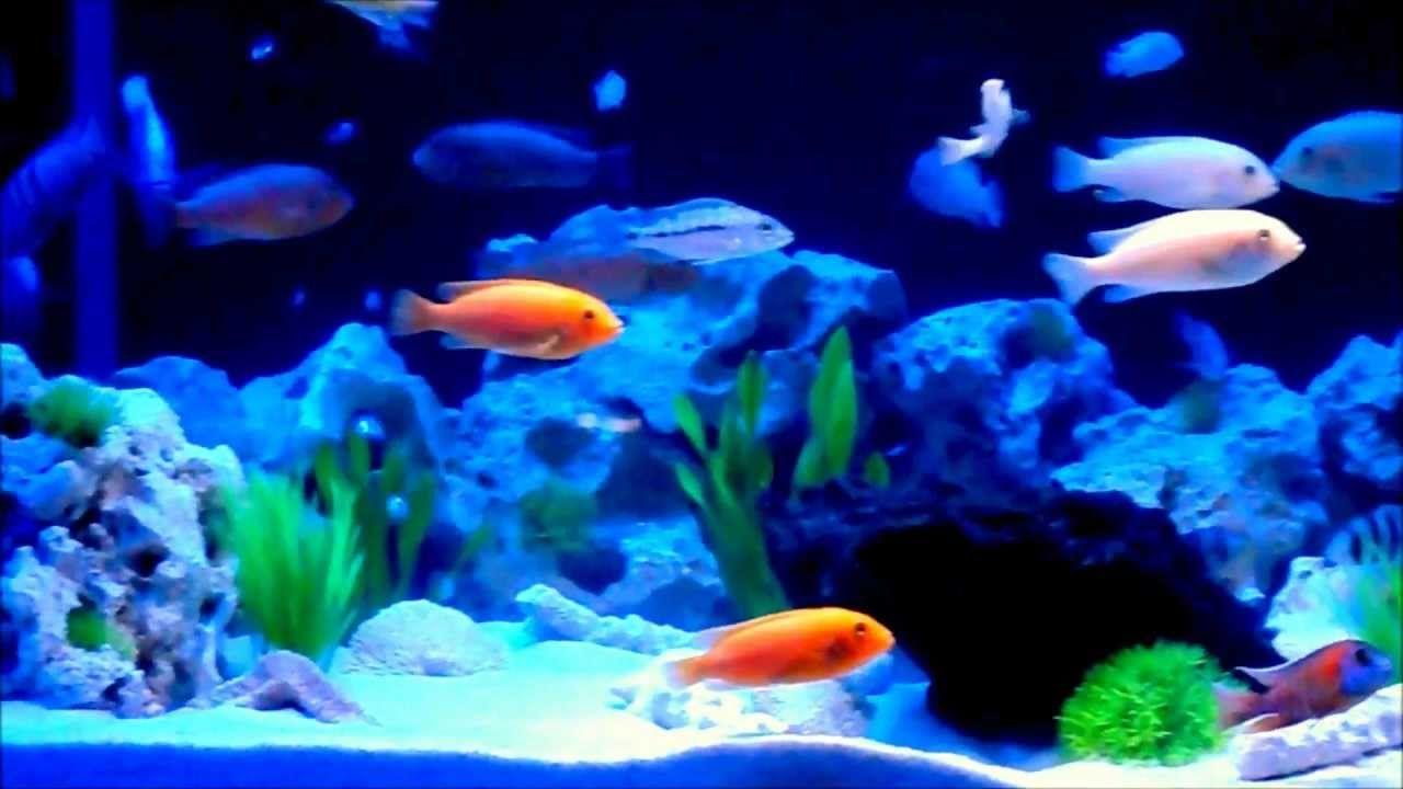 Malawi Aquarium 500l Mit Led Beleuchtung Malawi Aquarium Aquarium Led Beleuchtung