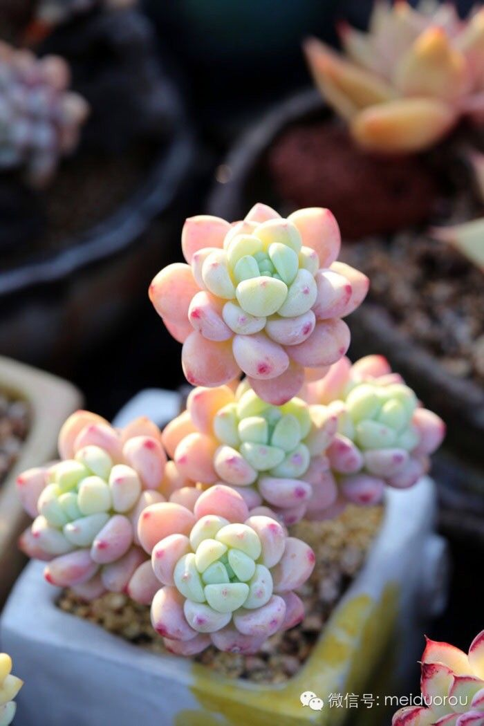 Pin auf Pflanzen Plants ~ 07123836_Sukkulenten Terrarium Einrichten