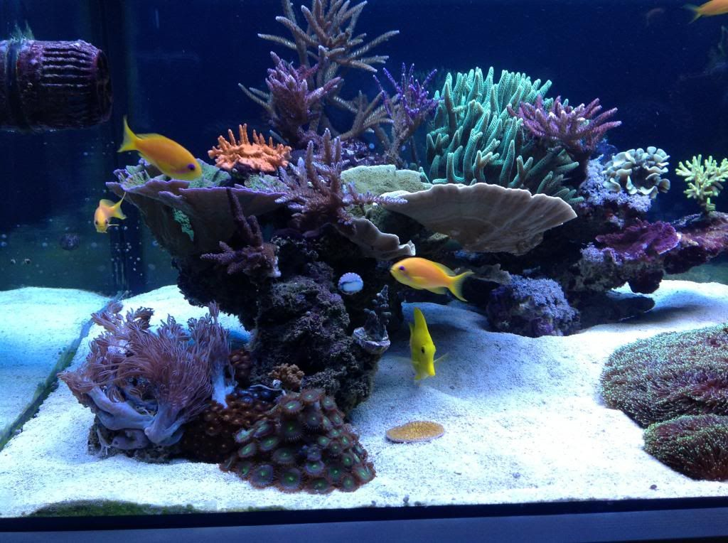 Aquascaping show your skills page 30 reef central for Saltwater fish online