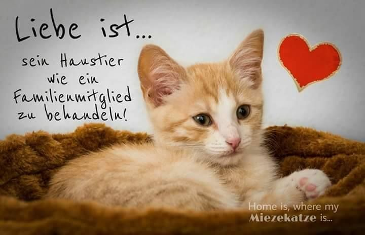 Liebe ist  - # ist #liebe in 2020   Katzen zitate