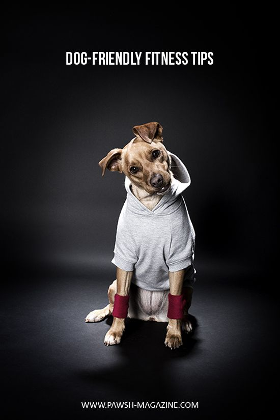 Dog Friendly Fitness Tips For The New Year Photo By Tonya Seemann Pet Photography Fitness Doghealth Pawsh