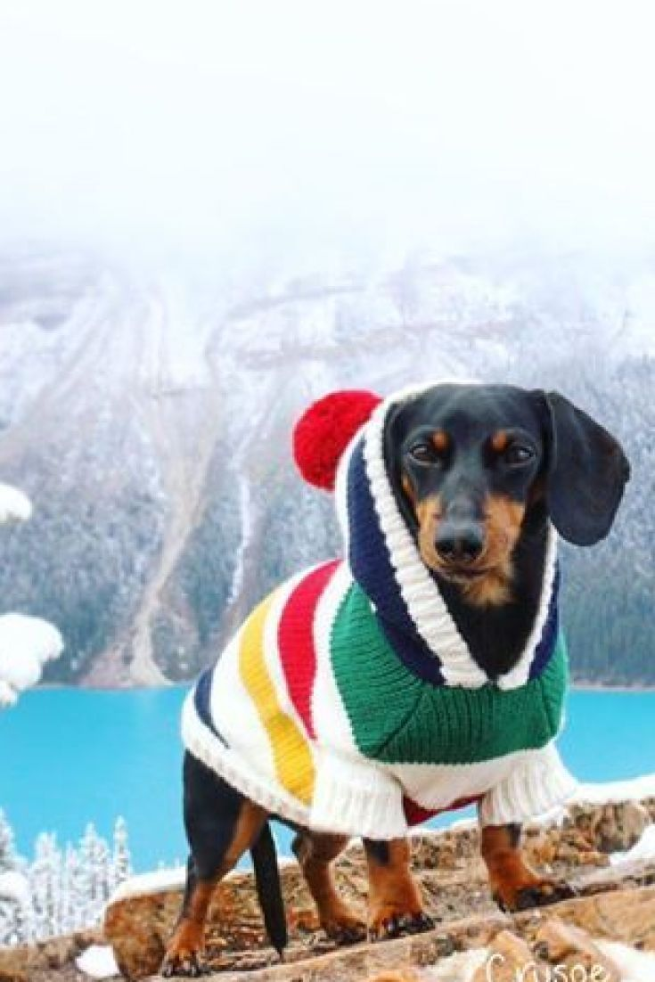 This Dog Just Took Your Dream Vacation To Banff With Images