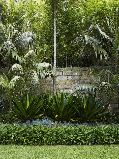 Fucrea foetida lawn palm and landscaping for Garden design with palms