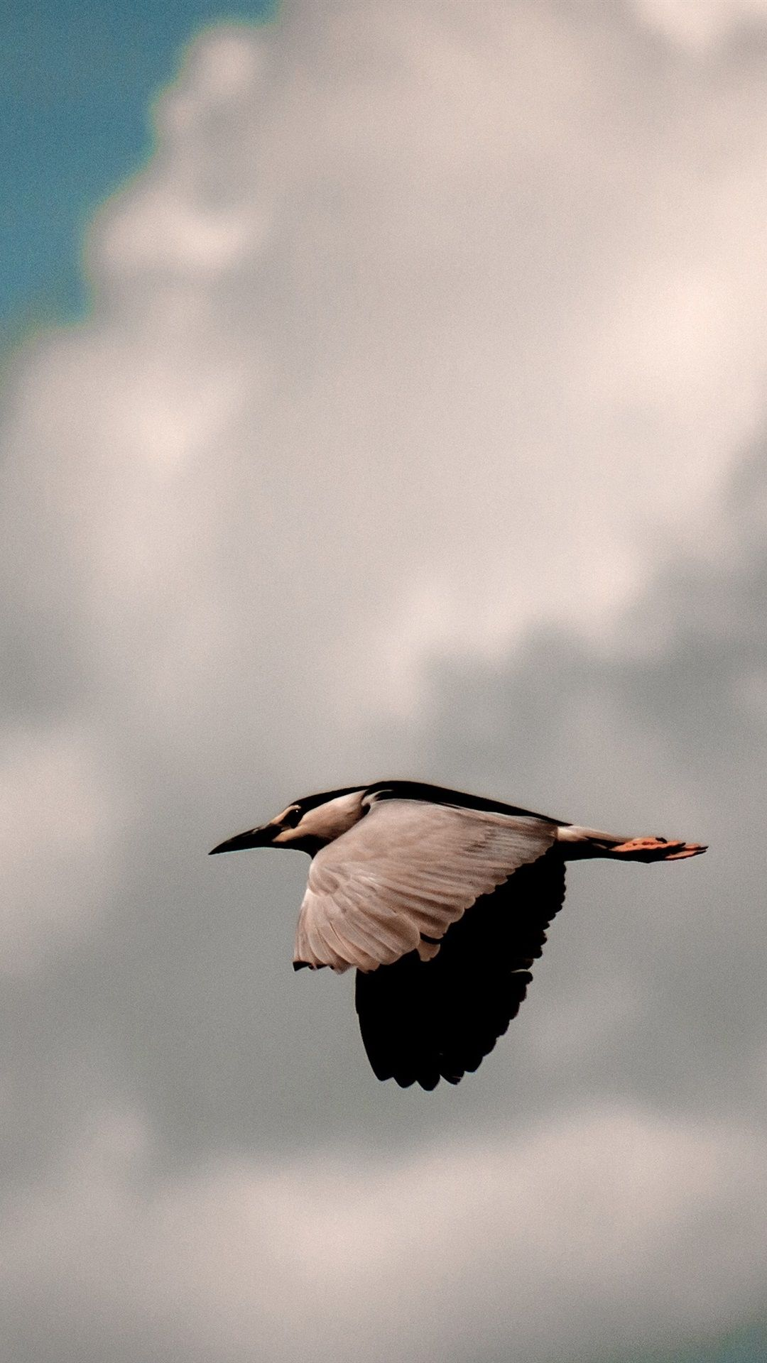 Flying Bird Wallpaper Hd Birds Wallpaper Hd Bird Wallpaper Birds Flying