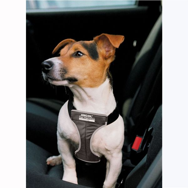 Image Result For Ancol Padded Safety Car Dog Harness Dogs Car