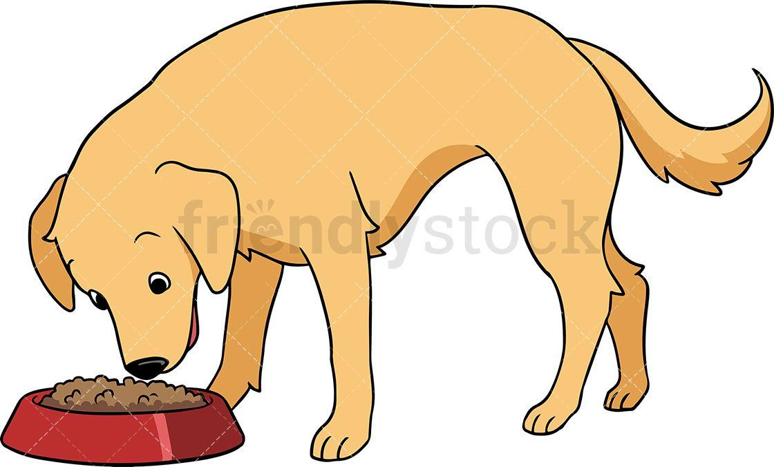 Golden Retriever Dog Eating Dogs Golden Retriever Dogs Dog Eating